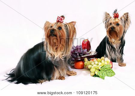 Dogs_And_Fruit