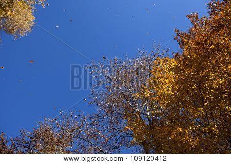 Yellow Leaves In The Fall Season