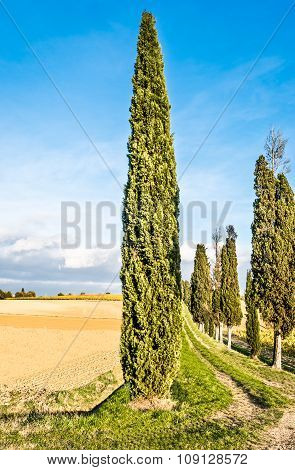 countryside of Lucignano in Tuscany