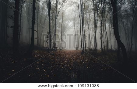 Path in mysterious forest in autumn with fog