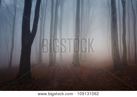 Surreal mysterious forest with fog