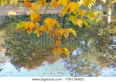 Leaves Above Water