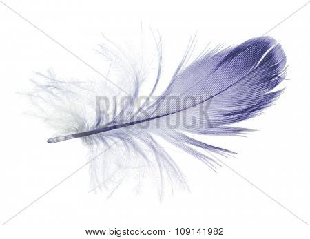 fluffy feather isolated on white background