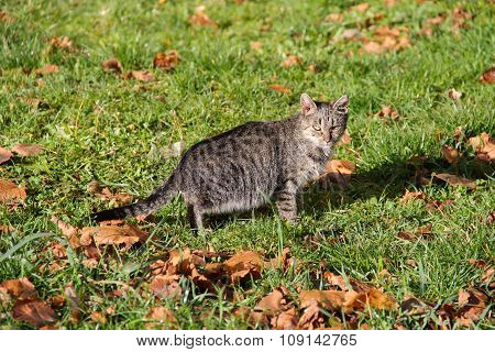 Cat on the lawn in autumn