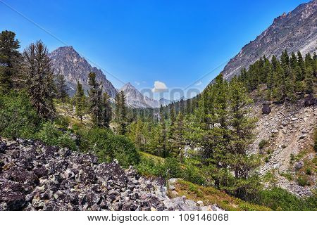 Mountain Woodland Scenery. Eastern Siberia