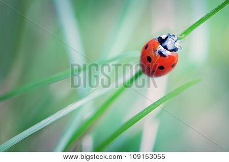 Climbing Lady Bug