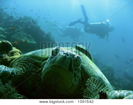 Turtle Divers