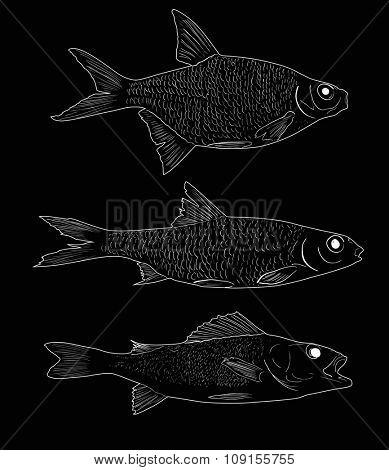 illustration with set of three freshwater fishes isolated on black background