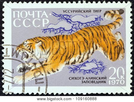 USSR - CIRCA 1970: A stamp printed in USSR shows a Siberian tiger