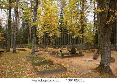 Old forest graveyard
