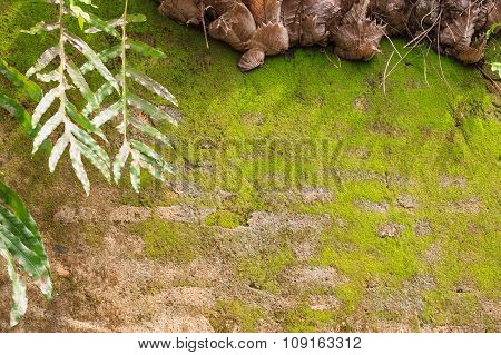 Fern And Moss On The Old Wall Texture