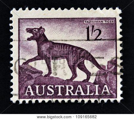 AUSTRALIA-CIRCA 1961: A stamp printed in Australia shows a Tasmanian tiger (Thylacinus cynocephalus)