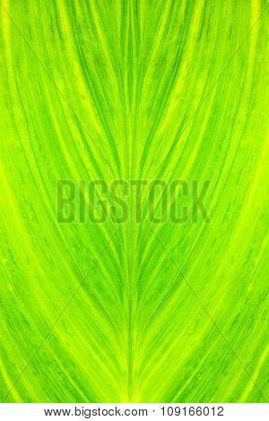 Fresh Green Leave