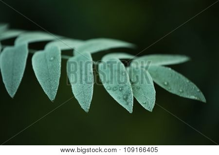 A branch with green tree leaves, on blurred background, close-up