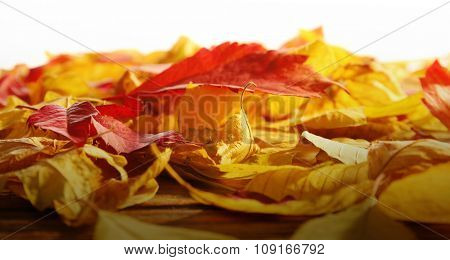 Red and yellow autumn leaves on wooden table, isolated on white