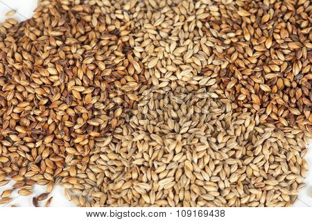 Closeup photo of malt grains