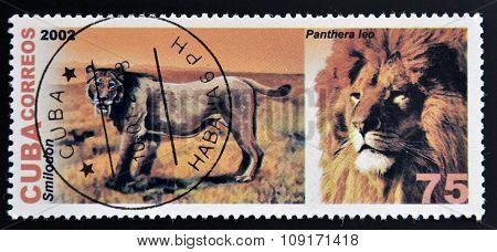 CUBA - CIRCA 2002: A stamp printed in Cuba shows panthera leo circa 2002