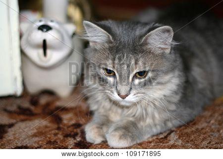 Grey Fluffy Tabby Cat Lying Om The Floor Near A Piggy Bank