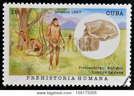 CUBA - CIRCA 1997: A stamp printed in Cuba dedicated to human prehistory shows the Pithecanthropus