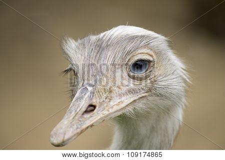 White Emu Portrait