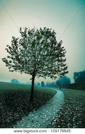Tree in autumn park, toned photo