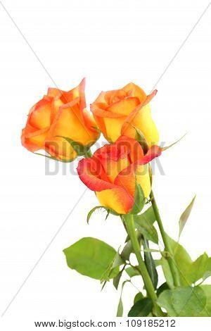 Bouquet Of Orange Roses On White Background