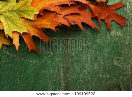 Colourful and bright fallen autumn leaves on green wooden background, copy space