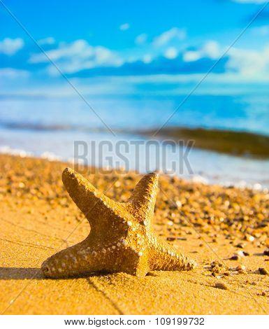 On a Beach Starfish called Wanda