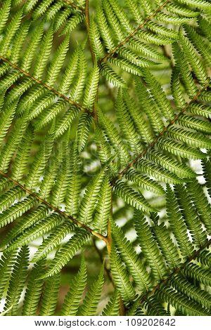Closeup of fern leaves