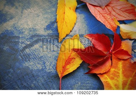 Colourful and bright fallen autumn leaves on wooden background, copy space