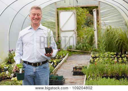 Man Choosing Plants At Garden Centre