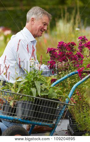 Senior Man Choosing Plants At Garden Centre