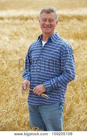 Farmer Inspecting Wheat Crop