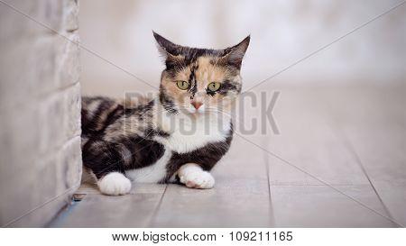 Portrait Of A Multi-colored Cat Near A Brick Light Wall