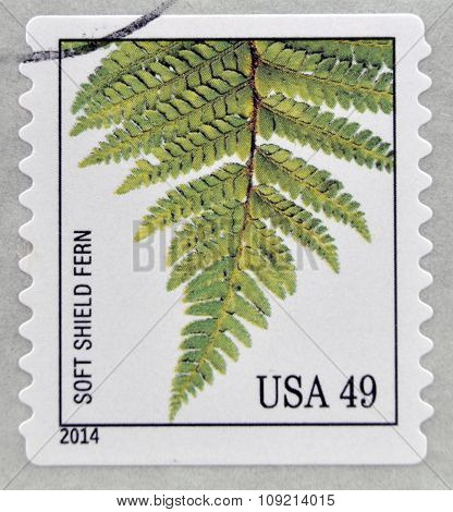 A stamp printed in USA dedicated to Ferns shows soft shield fern circa 2014