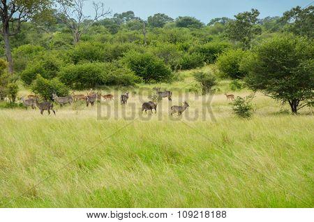 African savanna landscape, South Africa