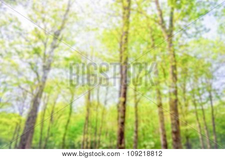 Defocused Background Of A Forest In Spring