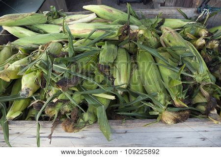 corn cobs at the market
