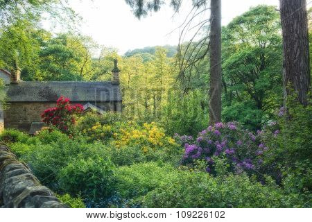 Cottage with flowers and plants