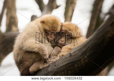 Monkeys on a branch