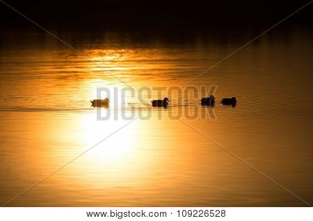 Birds on the water at sunrise