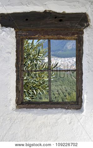 olive grove in Rute behind the old wooden window in the wall