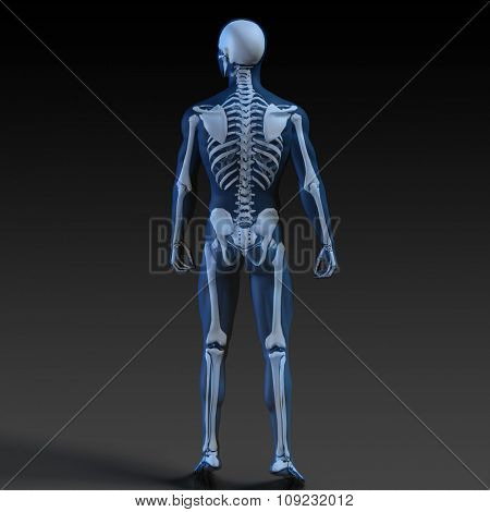Transparent Human with Bone Structure in Movement