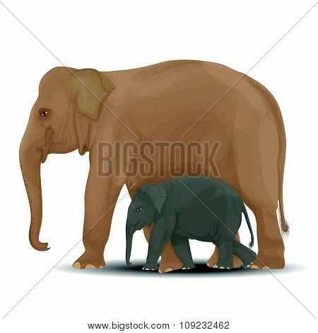 Elephant-01 [converted]