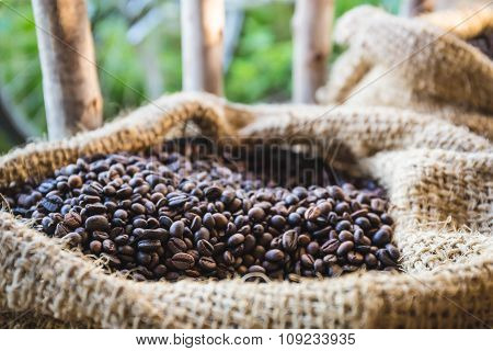 Closeup Coffee Beans With Sunlight In Gunny Bag
