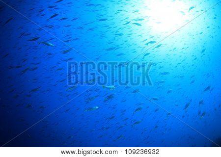 Fish blue water sun sea ocean