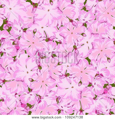 Seamless floral pink phlox background  in realistic hand-drawn style.
