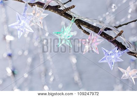 Colorful Christmas Lights On Bare Branches