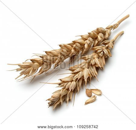 wheat ear isolated on white background cutout