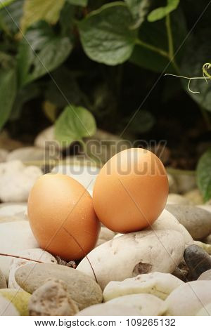 Eggs On A Background Of Stone At The Park